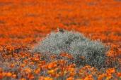 Lost in a Sea of Orange