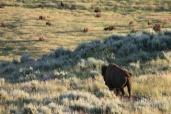 Plains Animals